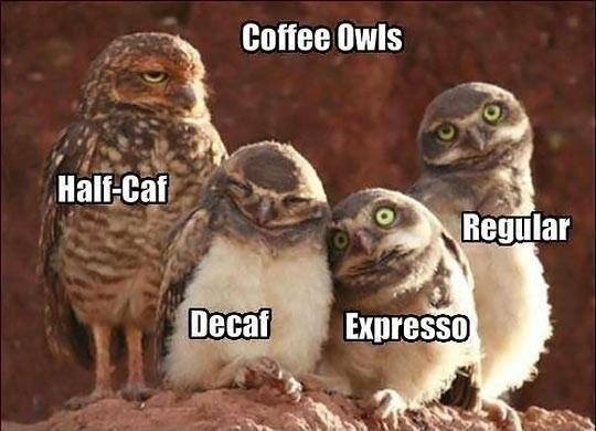 Coffee Owls.jpg